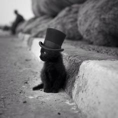 tiny kitten in a tiny top hat