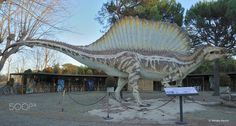 Spinosaurus aegyptiacus. - Taken in Chianciano Terme (Toscana, Italia). (January 2017) It was bigger than Tyrannosaurus rex.