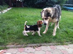 A dog to a dawg   http://ift.tt/2nhVyg3 via /r/dogpictures http://ift.tt/2mlRH2u  #lovabledogsaroundtheworld