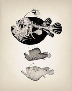 Angler Fish Skeleton  Scientific Anatomy by ThePrintedVintage, $11.50