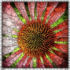 Digital Art Image for sale as prints or products. Created using Percolator App. Bright echinacea one of my favourite flowers. Mo Barton: Artist Website