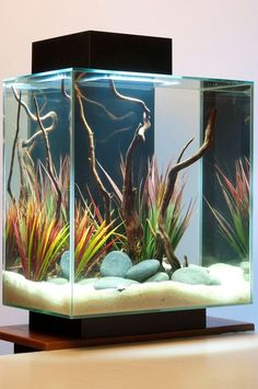 Amazing Aquascape Freshwater Gallery Ideas 101