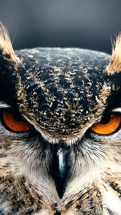 # Tiere # Eule Closeup # Tapeten - Famous Last Words Tier Wallpaper, Animal Wallpaper, Owl Wallpaper Iphone, Wallpaper Wallpapers, Owl Photos, Owl Pictures, Amazing Animals, Animals Beautiful, Animals And Pets