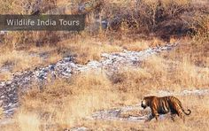 http://www.tourandtravelinindia.com/wildlife-india-tours.aspx  Wildlife India Tours Package Cost Starts From: $196 per person (twin sharing basis) for 05 nights & 06 days.