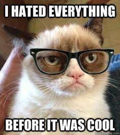 5f8f70f6254f32e7b47d9a31bf596bb9 grumpy cat meme cat memes franz paula l (franzkisko) on pinterest