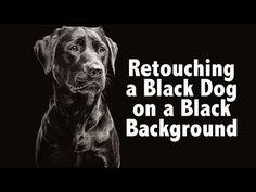 Photoshop Technique for Black Dog on Black Background