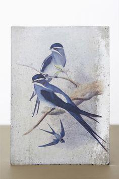 Painting, Animals, Art, Art Gallery, Contemporary Art, Idea Paint, Art Production, Art Background, Animales
