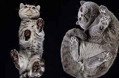 A Photographer Took Pics Of Cats From Underneath To Show Us A Side Of Them Rarely  Seen