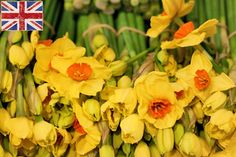 Daffs. Flower Market Report [MAR] | newcoventgardenmarket.com