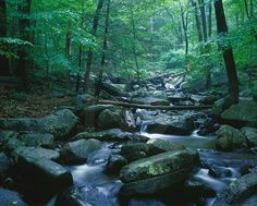 new jersey scenery | Keywords: new jersey,state park,outdoors,woods,nature,scenery,river ...