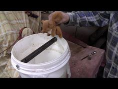 We show how to make a home made rolling log mouse trap You can purchase a ready made rolling log here: http:& Homemade Mouse Traps, Rat Traps, Pest Control, Rolls, Canning, Mice, Projects, Youtube, Homemade