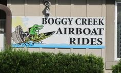 Gator Spotting at Boggy Creek Airboats
