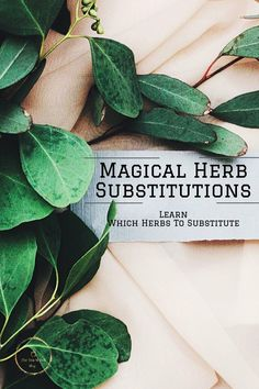 Can't seem to find the right herb to substitute for a magical herb in a spell recipe? Learn which are the ones that are perfect to use. Herbal Witch, Herbal Magic, Spells For Beginners, Witchcraft For Beginners, Holistic Remedies, Herbal Remedies, Magick Spells, Wiccan, Luck Spells