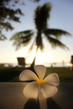 Fijian flower - plumeria