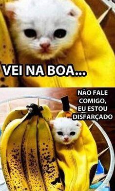Funny Animal Memes, Funny Cat Videos, Cute Funny Animals, Funny Jokes, Memes Humor, Memes Status, Cat Memes, Why God Why, Otaku Meme