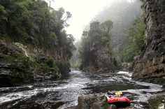 Rafting in Tasmania Places To See, Places To Travel, Wild Nature, Places Of Interest, Going Home, Tasmania, Rafting, Dream Vacations, The Life
