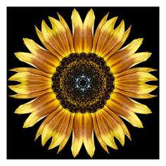 Flower Mandalas: Yellow and Brown Sunflower I - Flower Mandalas