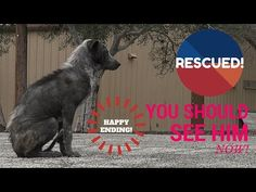 Hope For Paws: Rescue Mangy Dog After Months on the Street by Katie's Roadside Rescue - YouTube