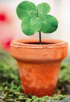 a 4 leaf clover!