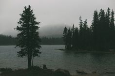 More from the cabin trip in the Uintas Dark Green Aesthetic, Nature Aesthetic, Different Aesthetics, Mirror Lake, Aesthetic Pictures, The Great Outdoors, Wilderness, Nature Photography, Scenery
