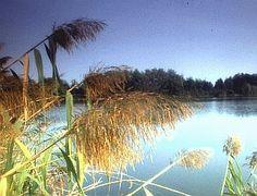 ALFONSINE - Riserva delle Alfonsine. Bacino di Fornace Violani (Foto Milko Marchetti, Mostra e Catalogo Biodiversità in Emilia-Romagna 2003)