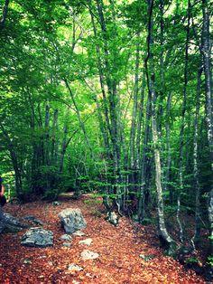 Bosco! Forest! In maggio 2013. Tambre, Italy. May 2013