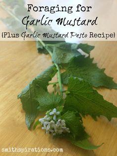 Foraging for Garlic Mustard {Plus Garlic Mustard Pesto Recipe}