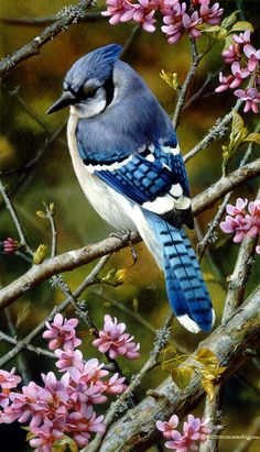 "Flash of Sapphire - Blue Jay by Carl Brenders LIMITED EDITION PRINT Image size: 8 1/2""w x 14""h."