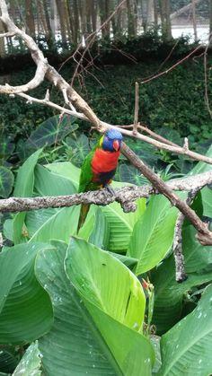 Riverbank Zoo, Parrot, Bird, Animals, Parrot Bird, Animales, Animaux, Birds, Animal