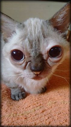 43 Best Down syndrome in animals images