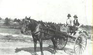 Charles Smith driving horse and sulky, Canterbury (suburb), ca Canterbury, 1930s, Australia, Horses, Animals, Animales, Animaux, Animal, Animais