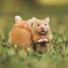 whispering hamsters.
