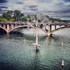Pfluger Pedestrian Bridge .@365 Things Austin | Did you know that 300 million trees died in Texas in the 2011 drought? The TH... | Webstagram - the best Instagram viewer