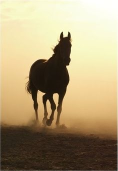 silhouette in the dust