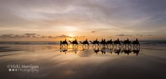 Photo Camels at Sunset by Vicki Horrigan on 500px