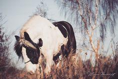 Der Mensch sollte sich auf die Verhaltensweisen und die Bedürfnisse des Pferdes einstellen - nicht umgekehrt. Zumindest wenn man eine harmonische Partnerschaft zwischen Pferd und Mensch erreichen möchte. Liberty, Cow, Horses, Animals, Political Freedom, Animales, Animaux, Freedom, Horse