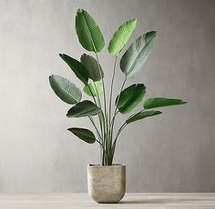RH's Grand Faux Kentia Palm Tree crafted by hand with exceptional realism, our lush faux tree is a grand botanical statement. With lifelike form, color and texture, each one-of-a-kind tree adds a note of verdant beauty that endures season after season. Indoor Trees, Indoor Plants, Indoor Gardening, Container Gardening, House Plants Decor, Plant Decor, Diy Plante, Birds Of Paradise Plant, Halloween Mason Jars