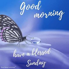 Morning Sunday Wishes to Kickstart Your Day Amazing pic of good morning with dew drop on purple Good Morning Friday Pictures, Good Morning Saturday Images, Good Morning Romantic, Latest Good Morning Images, Good Morning Wednesday, Good Morning Quotes For Him, Sunday Images, Good Morning Picture, Saturday Quotes