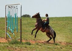 Extreme Appaloosa Makeover: The Making of a Spotted Wonder Horse: Obstacle courses and more trail rides!