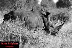 Kruger National Park 2012
