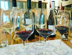 You could be with us! Lungarotti wines are fabulous. www.tlc-travels.com