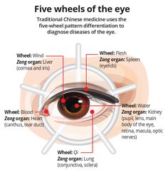 The wheels of the eye according to Chinese medicine