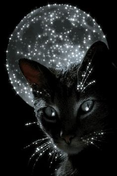 moon and a black cat.love this one