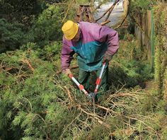 Best Loppers - A man cutting the branches off of a tree Garden Loppers, Best Garden Tools, Starting A Garden, Branches, Outdoor Power Equipment, Good Things, Gardening, Lawn And Garden, Garden Tools