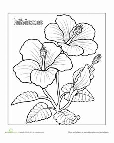 Hibiscus Coloring Page Worksheet