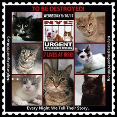 """TO BE DESTROYED 5/10/17 - - Info  Please share View tonight's list here: http://nyccats.urgentpodr.org/tbd-cats-page/. The shelter closes at 8pm. Go to the ACC website( http:/www.nycacc.org/PublicAtRisk.htm) ASAP to adopt a PUBLIC LIST cat (noted with a """"P"""" on their profile) and/or … CLICK HERE FOR ADDITIONAL…Please…Please...-  Click for info & Current Status: http://nyccats.urgentpodr.org/to-be-destroyed-32017/"""