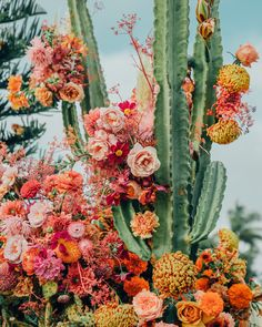Cactus Photography, Art Photography, Cute Wallpapers, Wallpaper Backgrounds, Iphone Wallpapers, Floating Flowers, Flower Aesthetic, Desert Aesthetic, Cactus Y Suculentas