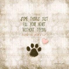 Animal quote