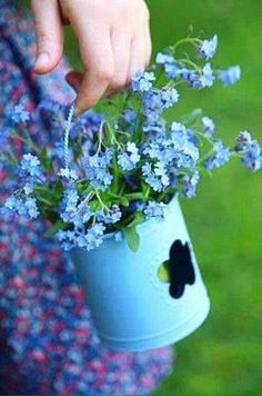 Fresh Forget-Me-Nots