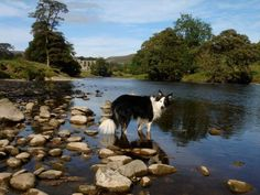 Judy Popley took this photo of this pooch enjoying the water at Bolton Abbey. Bolton Abbey, Duke Of Devonshire, British Countryside, Family Days Out, Yorkshire Dales, Pavilion, Acre, Greece, History